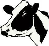 Cow 160x160